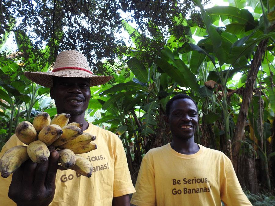 バナナ農園で働くスタッフ