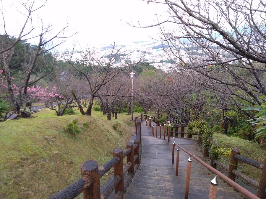 名護さくら祭り(名護中央公園)